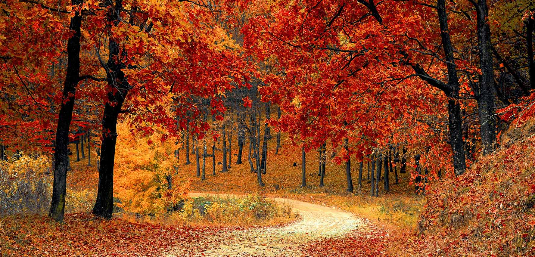 Orange and red trees along a path